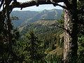 Горы с лесами кавказа