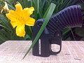 Оса, весна, цветы...