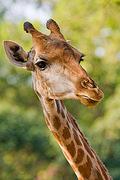Животные в сафари-парке 2