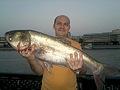 Толстолобик 10 кг, пойман в Москва реке