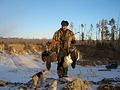 Борловая дичь -глухарь