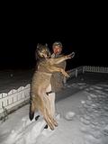 чернобыльский волк