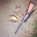 Охота на сусликов