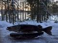 Монстры озера Вуокаланьярви