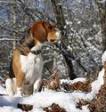 Прогулки с охотником